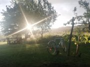 Fahrradpicknick am Donaustrand